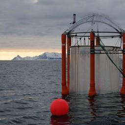 Mesocosm off the coast of Svalbard