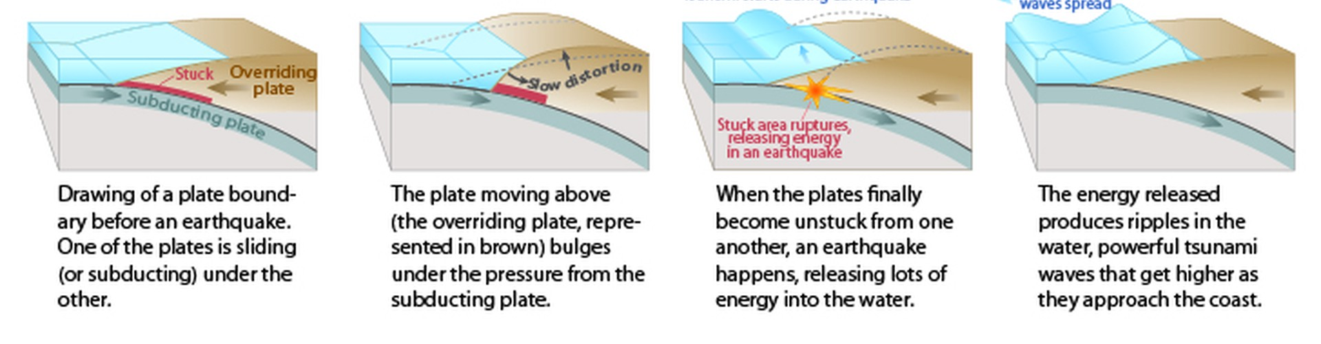 This diagram shows how a tsunami forms following an underwater earthquake. (Credit: US Geological Survey)