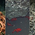 Some of the species you can find in the deep sea!