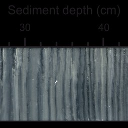 Sediment core from the study area