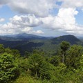 Borneo rainforest (Danum Valley)