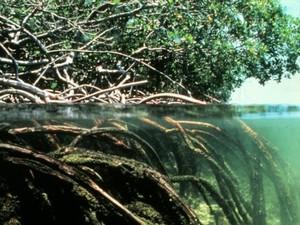 ecohydrology.jpg