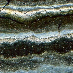 Microscopic view of laminated sediments from Lake Zabinskje in Poland