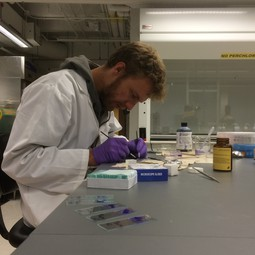 Palaeobotanist Tammo Reichgelt working on fossil leaves in the lab at the Lamont Doherty Earth Observatory.