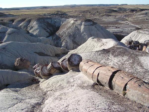 A petrified log in Petrified Forest National Park, Arizona USA
