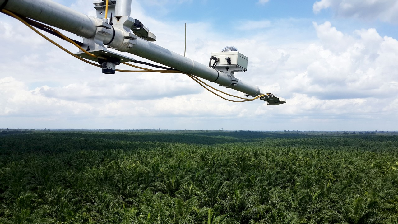 Radiation measurements above a mature oil palm plantation (Credit: Ana Meijide)