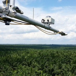 Radiation measurements above a mature oil palm plantation