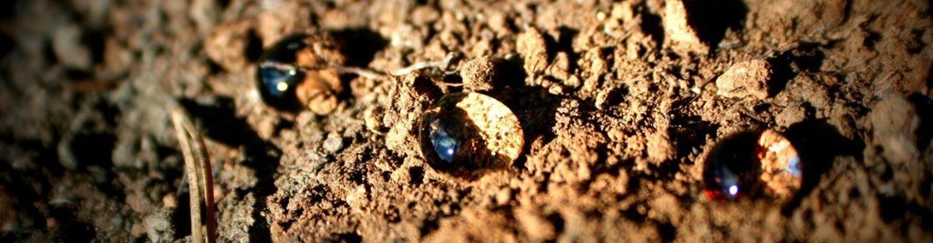 Soil water repellency (Credit: Antonio Jordán, distributed via imaggeo.egu.eu)
