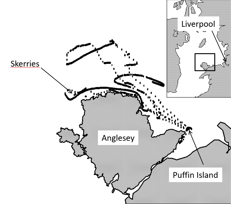 Track of one of the tagged birds (Credit: Cooper et al., Ocean Science, 2018)