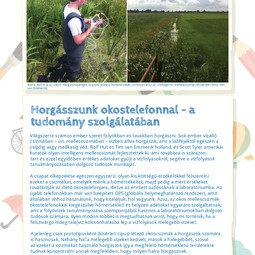 Hungarian translation