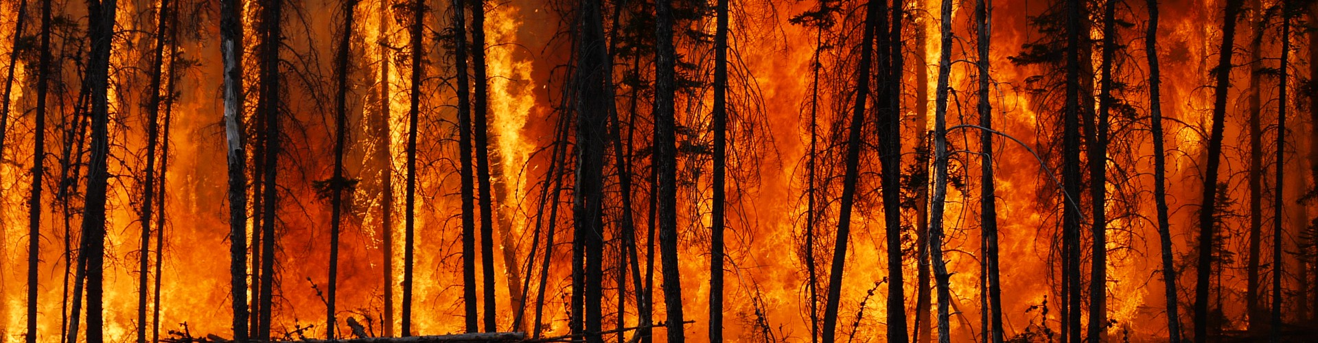 Boreal forest fire in Canada (Credit: Stefan Doerr via Imaggeo, CC BY-ND 3.0)