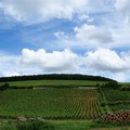 Vineyards in Beaune, Burgundy