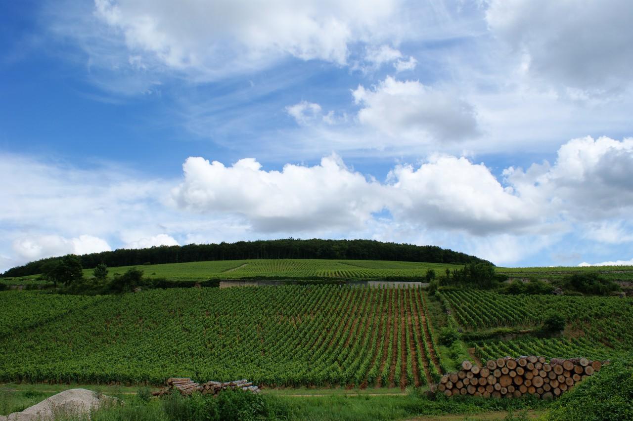 Vineyards in Beaune, Burgundy (Credit: Olivier Duquesne via Flickr)