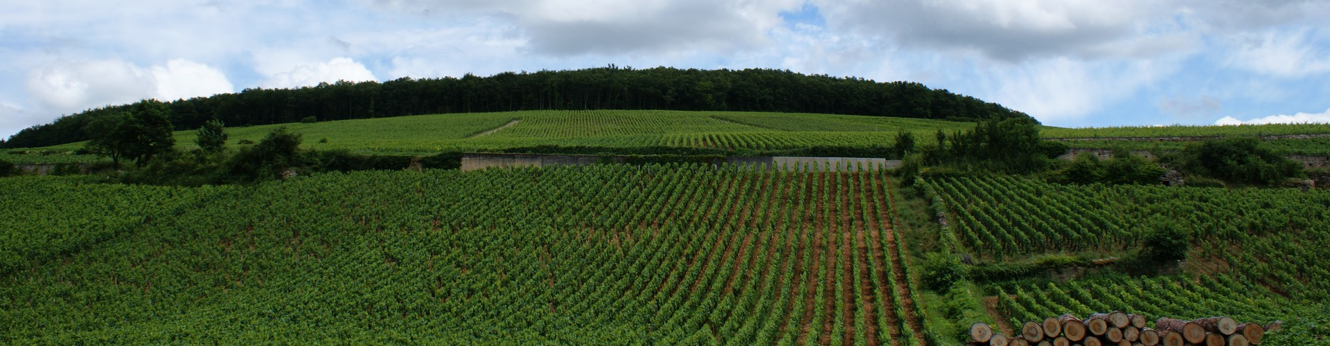 Vineyards in Beaune, Burgundy (Credit: Olivier Duquesne via Flickr)