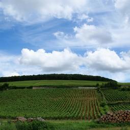 Vineyards in Beaune, Burgundy