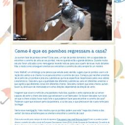 Portuguese translation