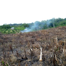 Land clearing in Jambi, Sumatra