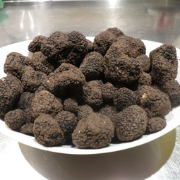 Burgundy truffles ready for analysis