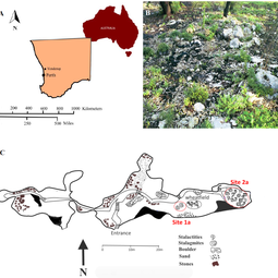 Study site: location, post-wildfire vegetation, and map of Yonderup cave